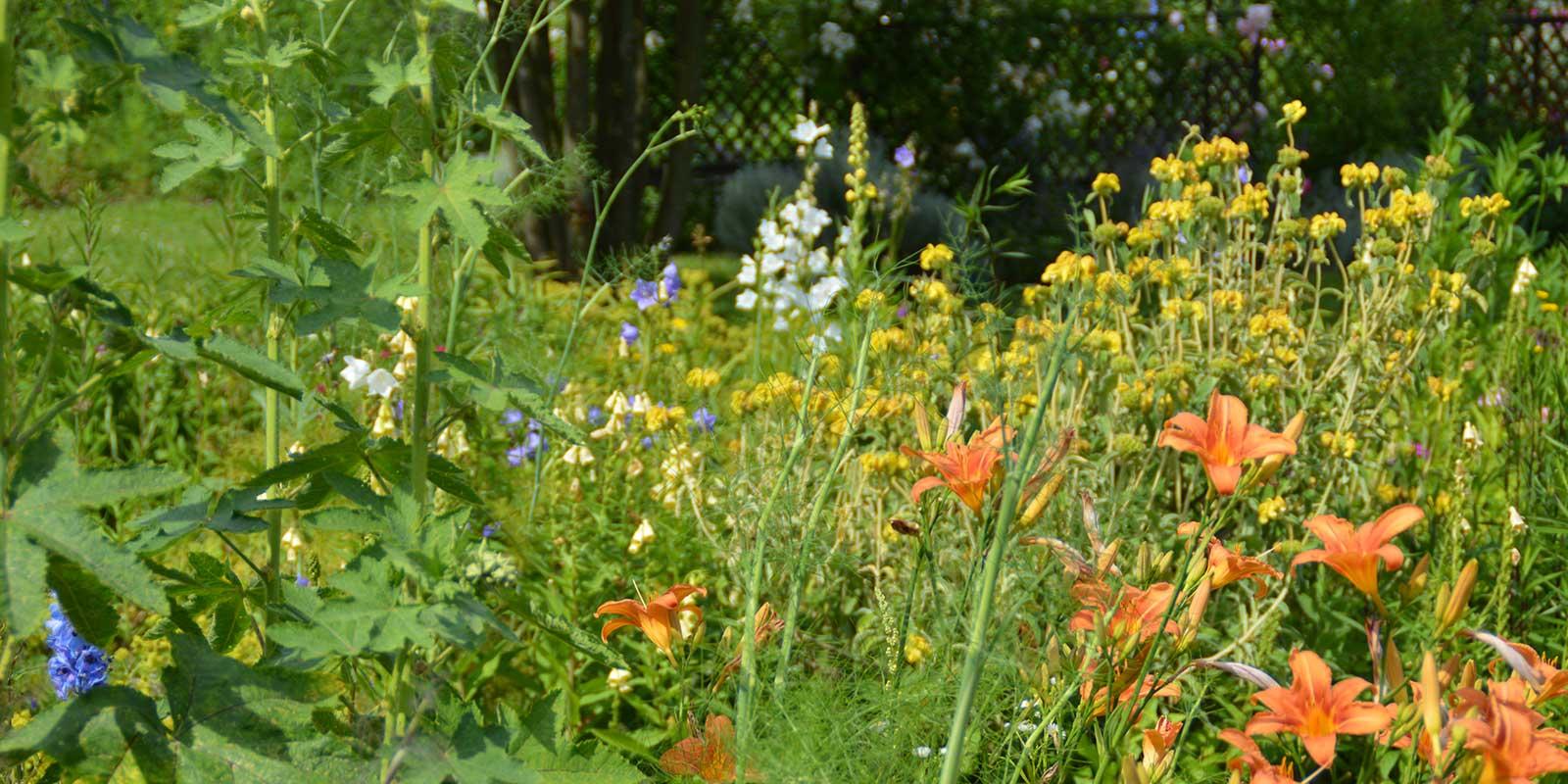 Hortus Nijmegen, een heerlijke tuin om te vertoeven