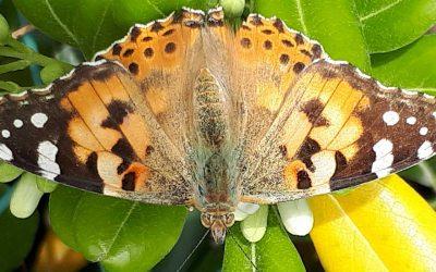 Doe mee en maak een eigen vlinderportret.
