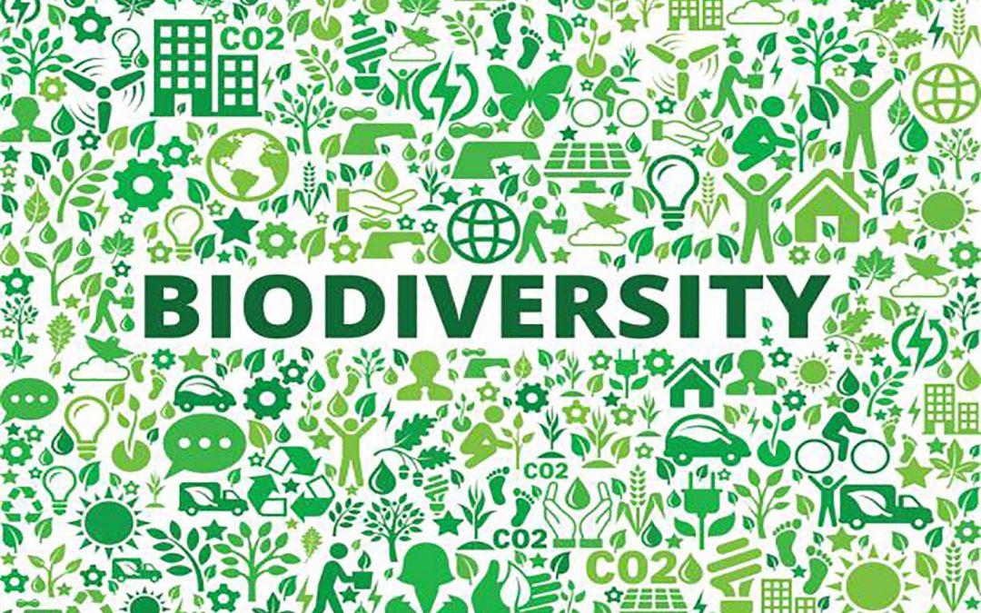 Biodiversiteit in de Hortus Nijmegen