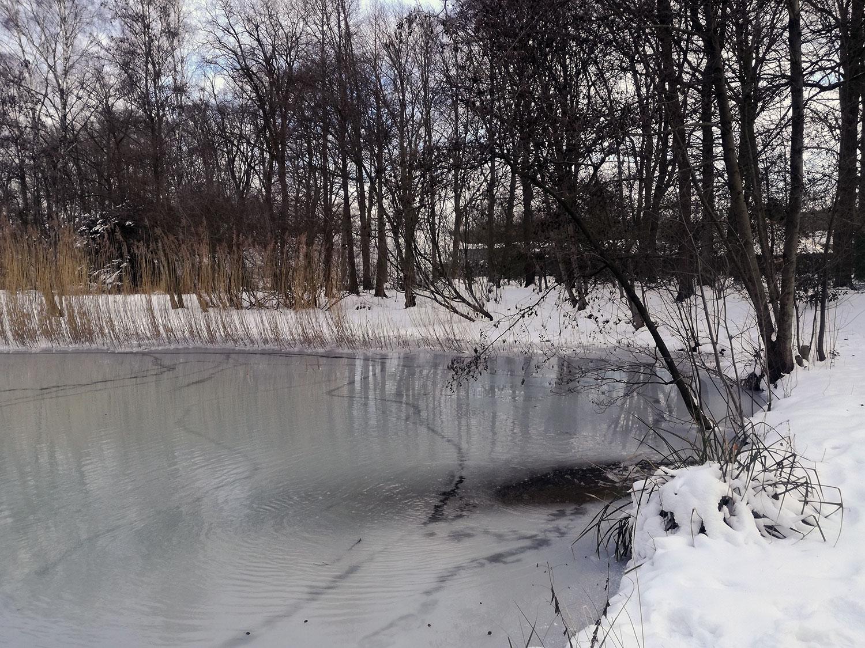 Dichtgevroren vijver Hortus Nijmegen